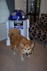 Even R2 needed to be herded into the corner.